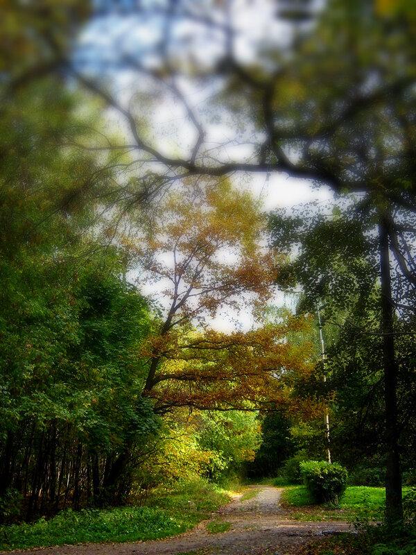 Цветной осений пейзаж