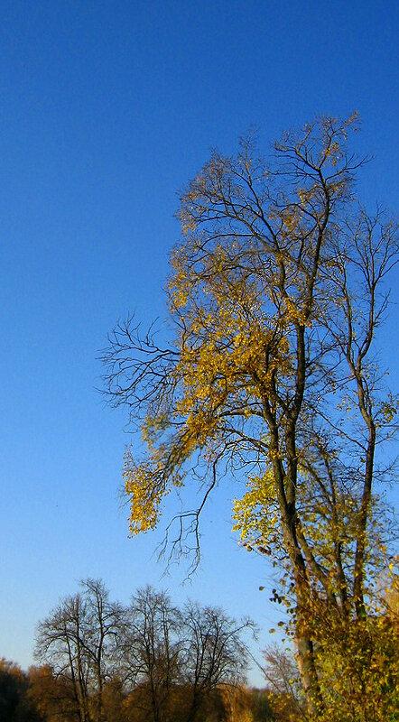 Вертикальный пейзаж. Об осени