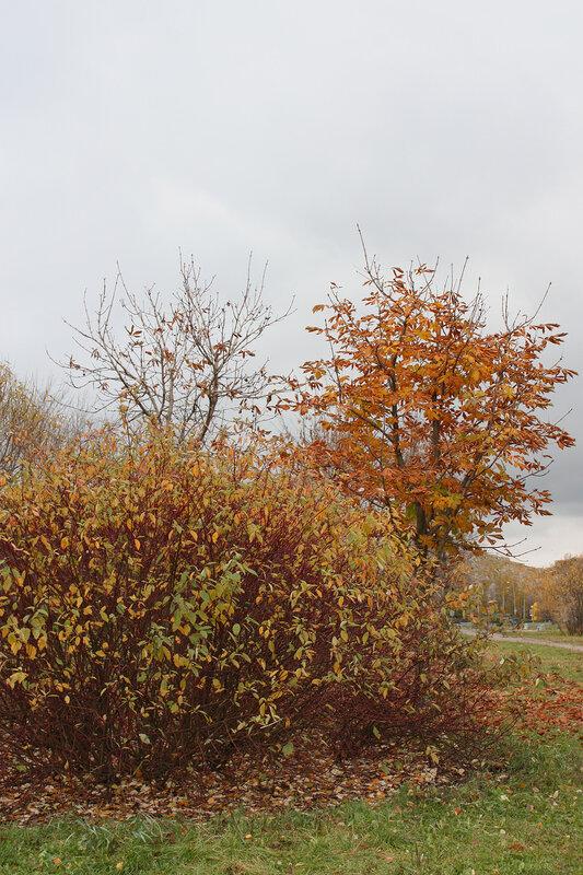 Осенний куст