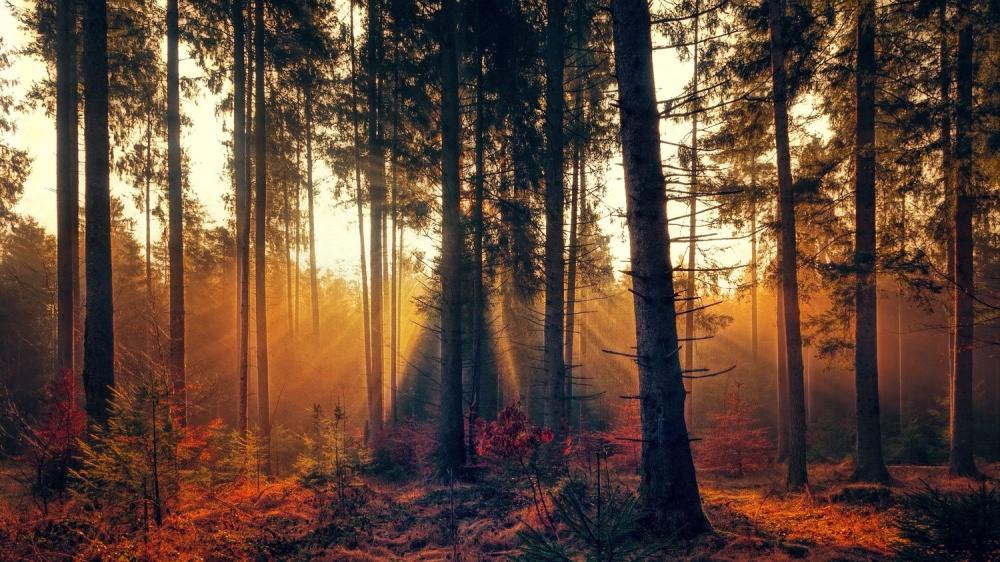© Joe P.   Вообще осень— это предлог остаться дома ипочитать хорошую книжку