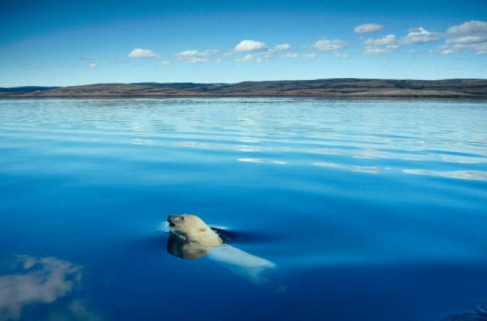 Ученые бьют тревогу: десятки островов пропали вСеверном ледовитом океане