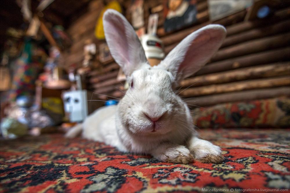 следуй за белым кроликом...