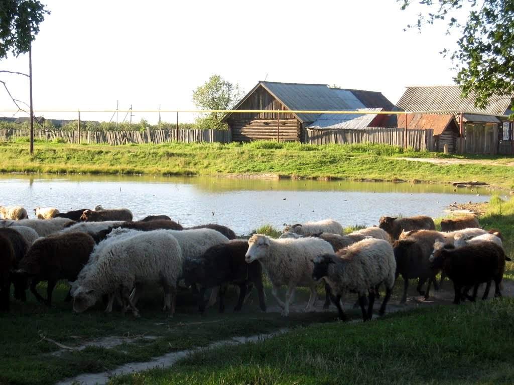 Село Исменцы, священная роща