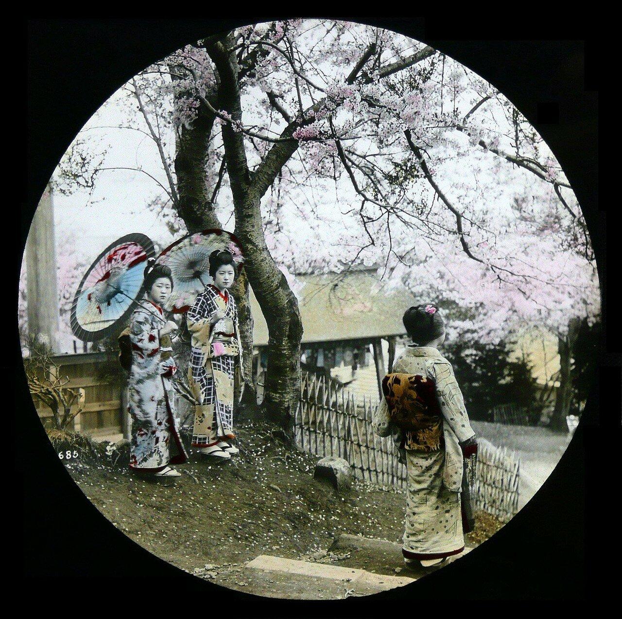 Три гейши под цветущей вишней