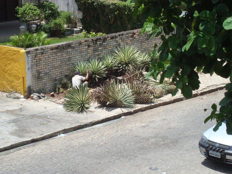 Стрижка растений