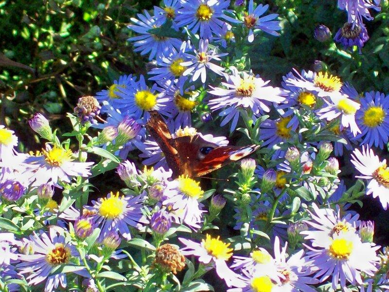 Живая бабочка на цветах