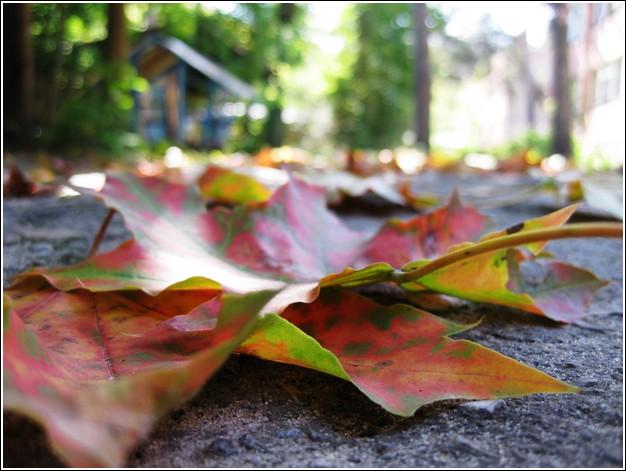 Конкурс осенних листьев