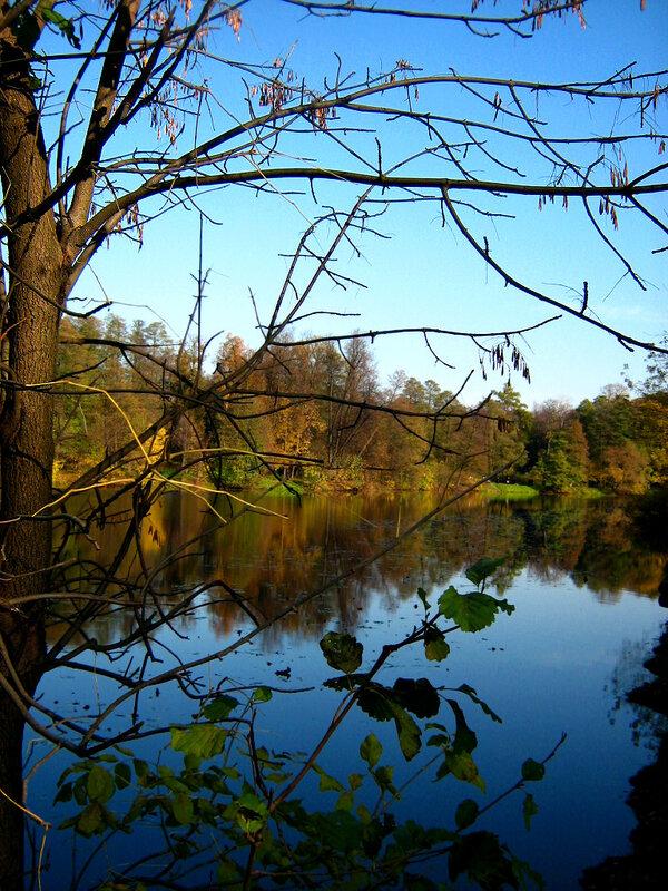 Облетевшая листва ветвей у пруда