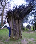 богатырское дерево.JPG