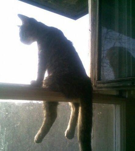 Как сидит кот на стекле