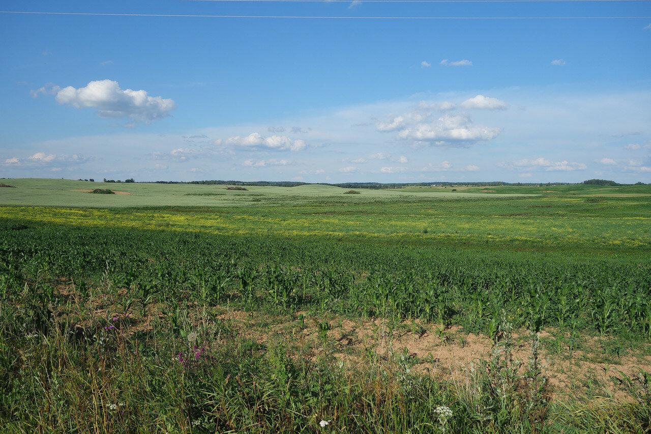 холмистые поля Браславского уезда