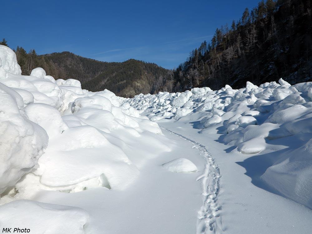 Волчья тропа по замёрзшей быстрине