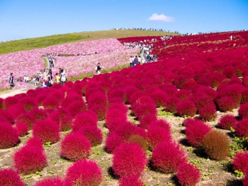 Живописный японский парк Хитати Кайхин 0 1422cf d0a0ae13 orig