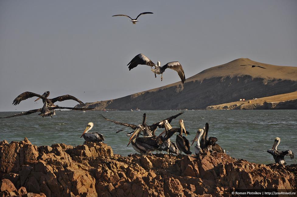 0 161736 6c9350a2 orig Национальный парк Паракас и острова Бальестас в Перу