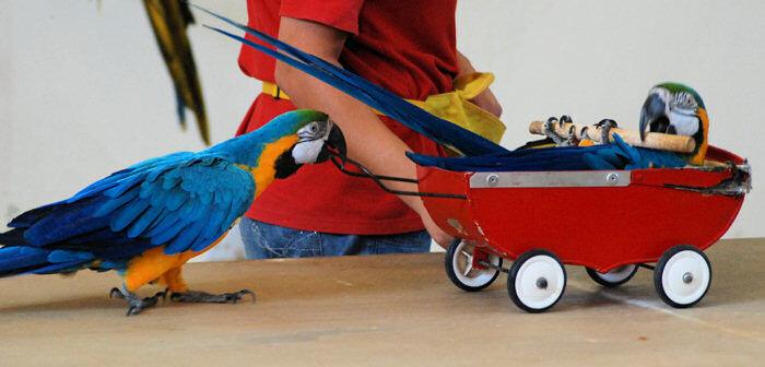 На Шоу попугаев