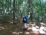 В лесу тихо