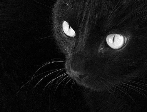 Интересно. ответ.  Черная кошка. lun969.
