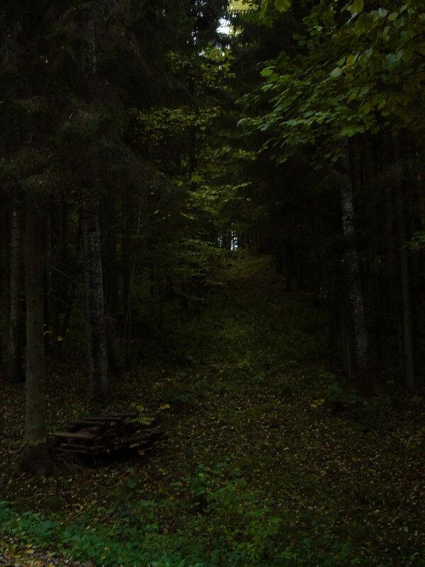 карамелю дремучем мою сосу лесу я в темном