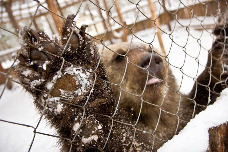 """В зоокомплексе """"Три медведя"""""""