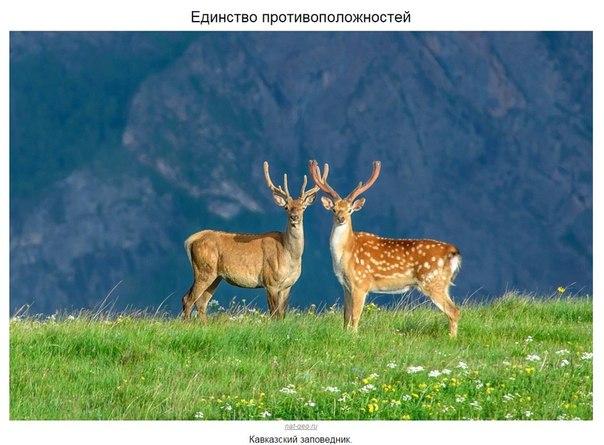 Дикая природа