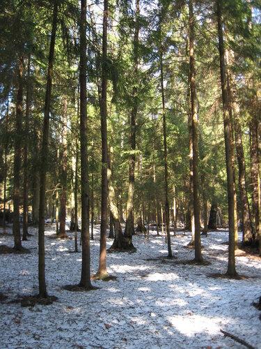 арпельский лес