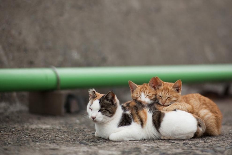 Фото 6 - Кошачий рай в Японии