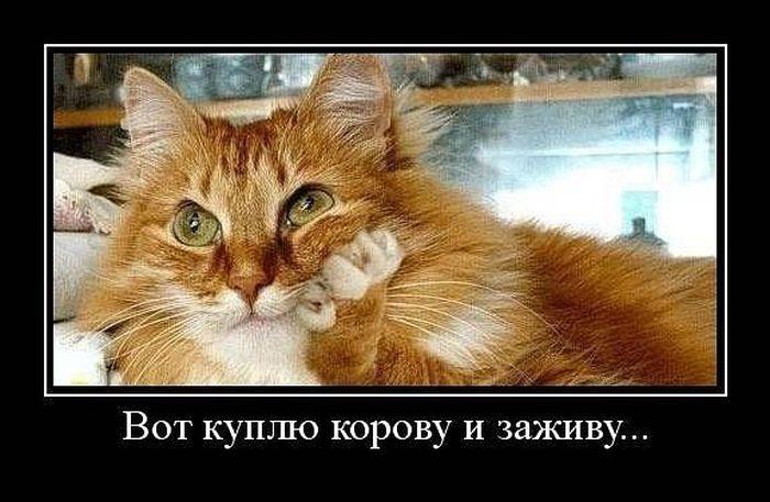 Картинки по запросу смешные животные с надписями