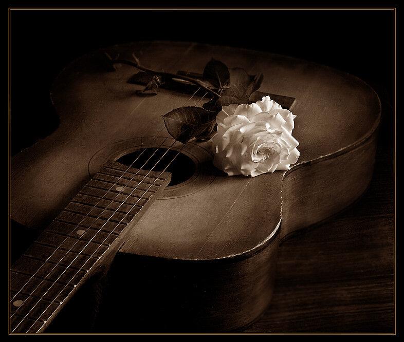 Опубликовал.  ЖИЗНЬ.  Белая роза лежит на гитаре.  BRODJaGA.
