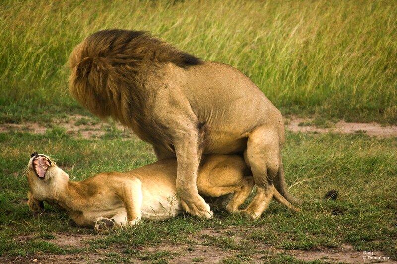 Вдео порно секс у львов