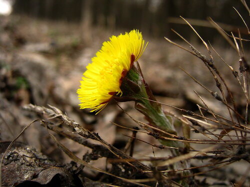 Альбом: лесные растения Автор фото: Лариса Петрович