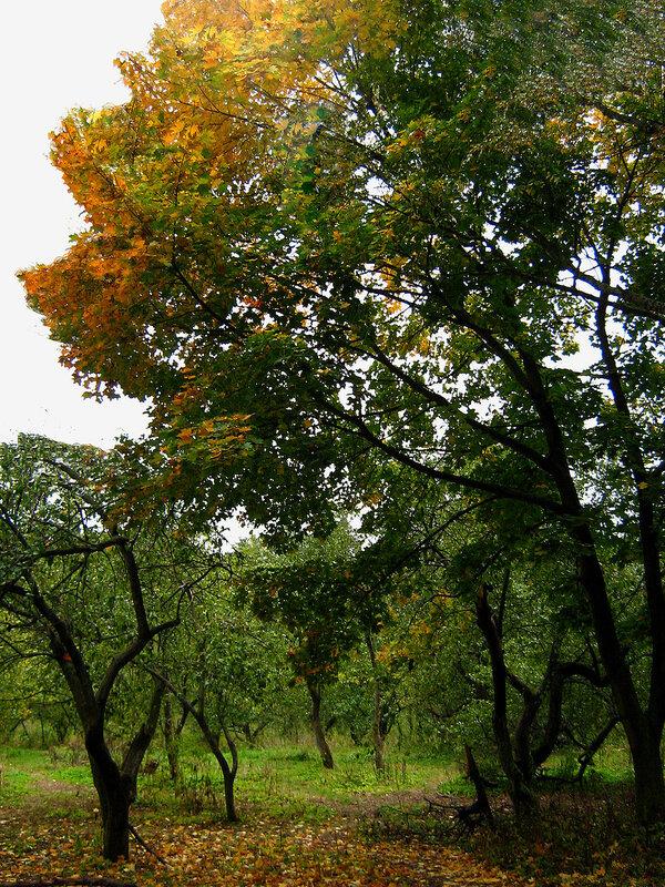 Осень в яблоневом саду