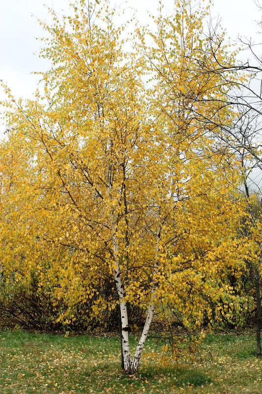 Красотка в желтом