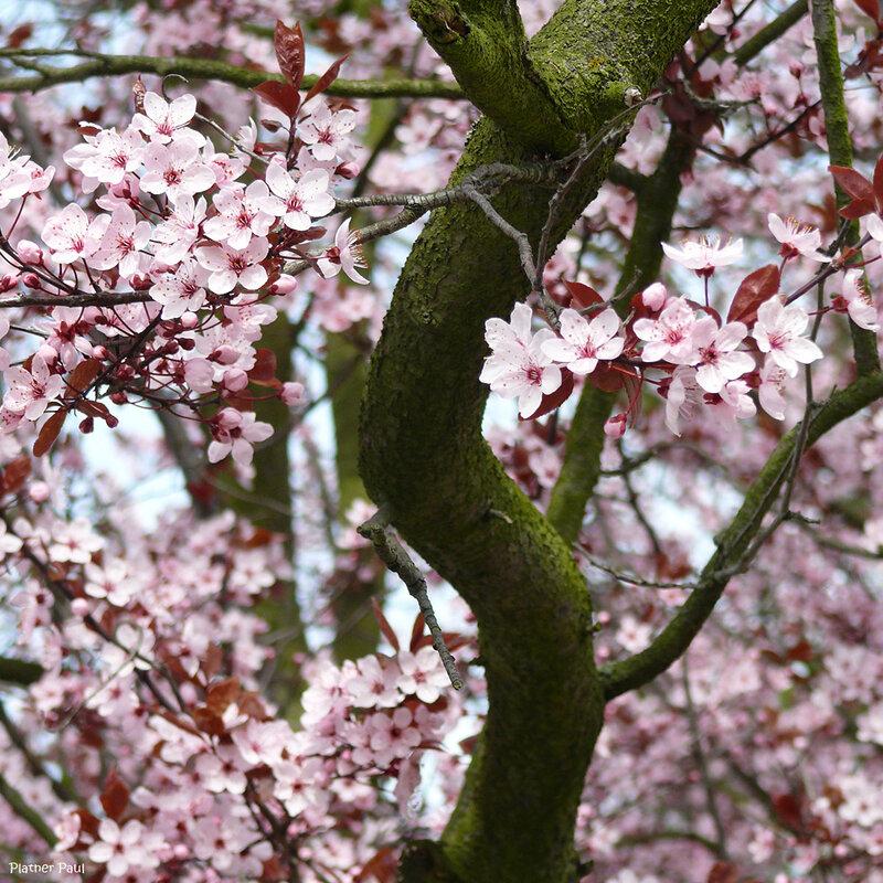 весна на нашей улице )
