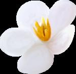 NLD Flower 10 d.png