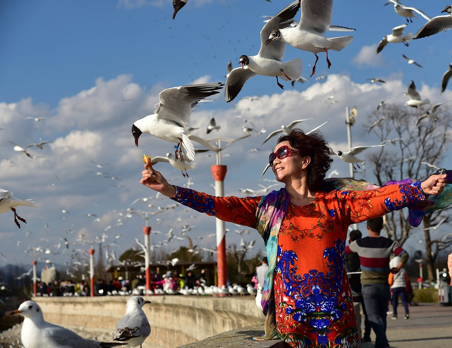 Tourists Play With Seagulls In Kunming