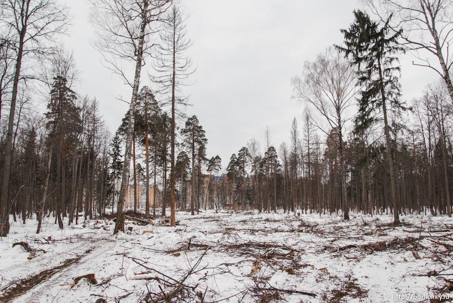 срубили деревья