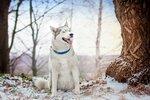 зимние фотопрогулки