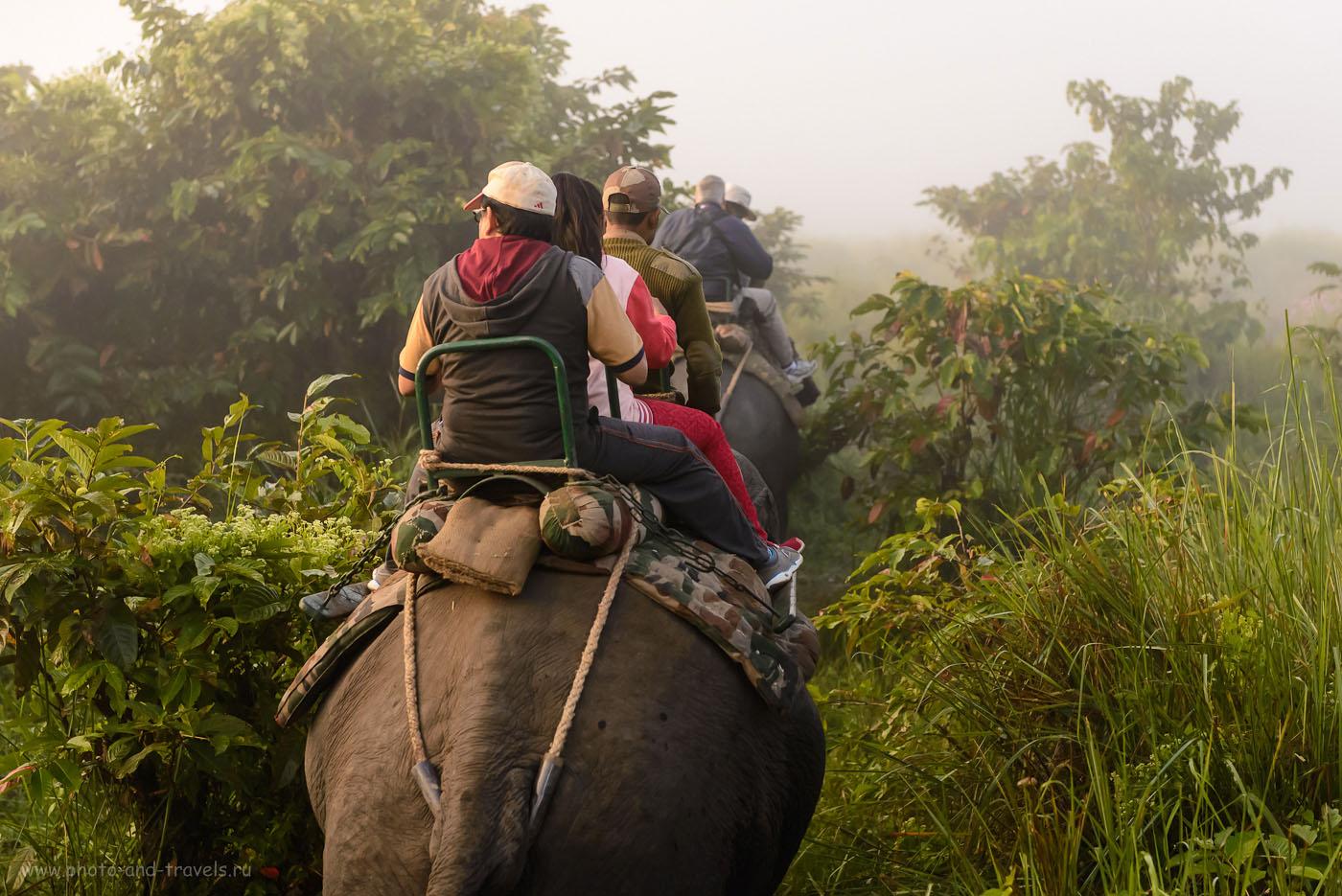Фото 5. Слоновье сафари в парке Казиранга. Поездка по Индии дикарями. Отзывы туристов. 1/4000, -0.67, 3.5, 2500, 66. Nikon 24-70/2.8