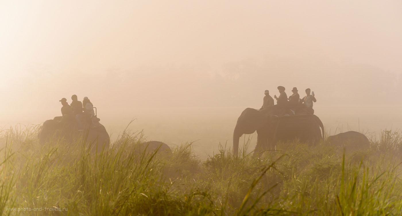 Фотография 11. Слоновье сафари в Индии. Отзывы туристов. 1/1250, 4.8, 200, 135.
