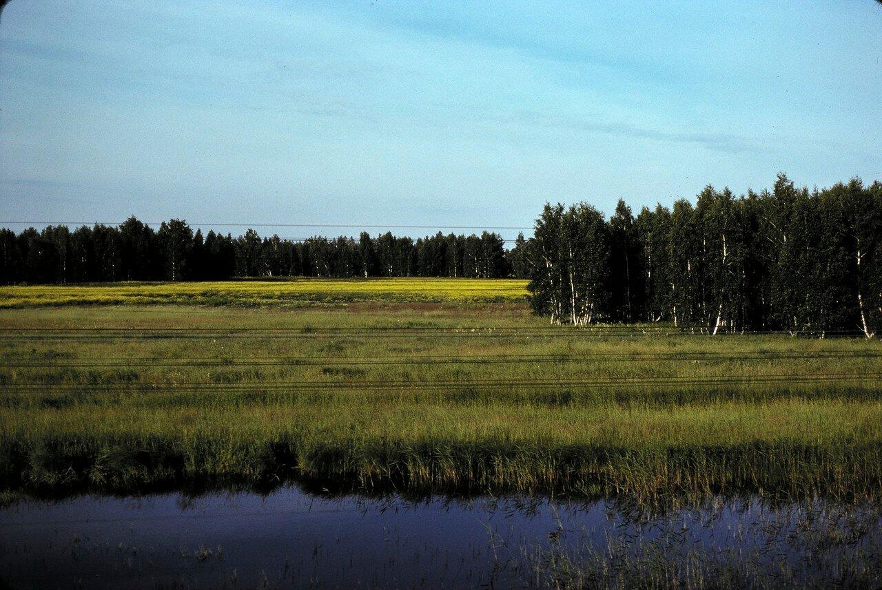 Березовый лес в окрестностях Омска. 2715 км от Москвы