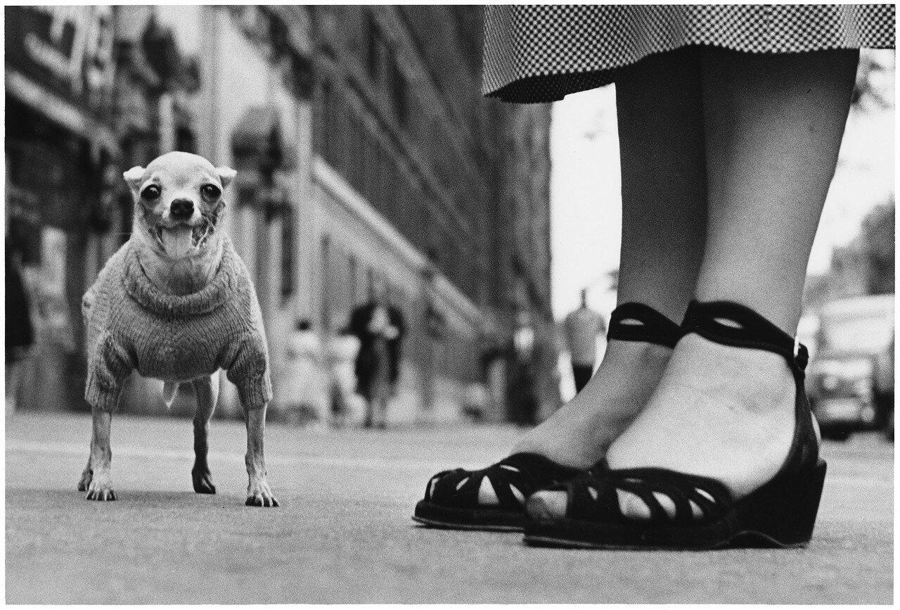 1946. Нью-Йорк
