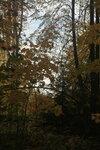 Межутино, Тюрмеровский лес