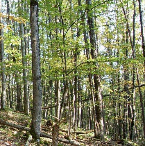 12 октября 2008, под Горячим Ключом, деревья (185).JPG