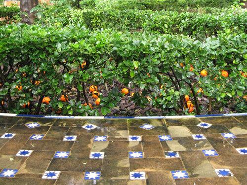 Звезды и апельсины