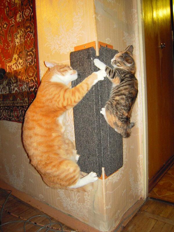 Когтечесалка для кошки своими руками
