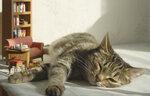 Чита, спит, она устала. Ну и я мешать не стала.