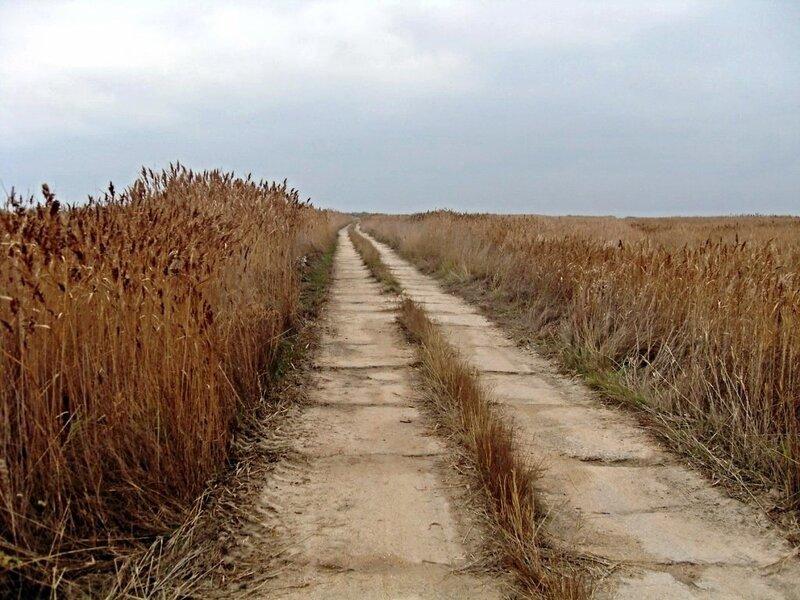 Пустынность дороги... в ноябре ... SDC16666