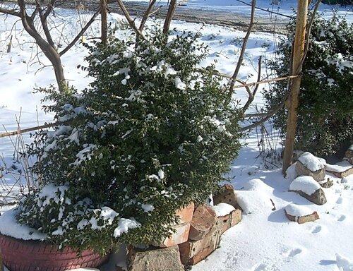 Мартовский снег (10)