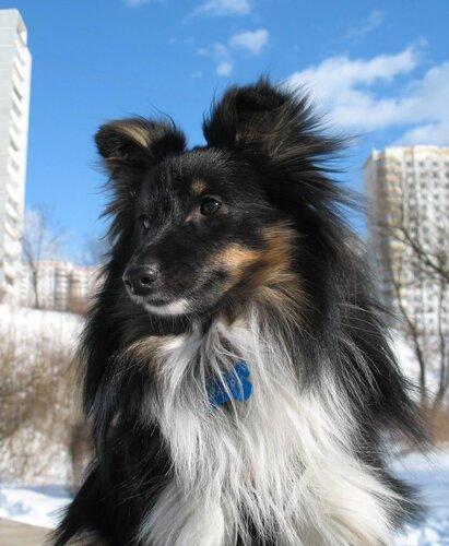 Шагри 1 год :)