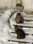 Юрмальские Коты